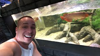 LATE NIGHT LIVE with the KING OF DIY's AQUARIUMS!