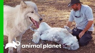 """""""Big Bad Wolf"""" Finds Love At Lockwood Animal Rescue 