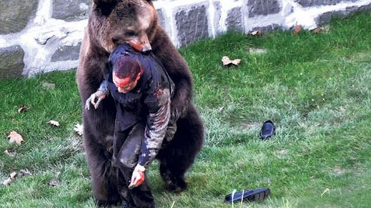Grizzly bear attack on togwotee pass pinnacles mountain bike Bear attack last photo