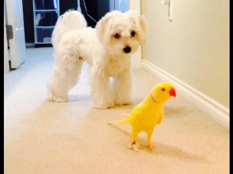 Birdy and Doggy Taking a Stroll