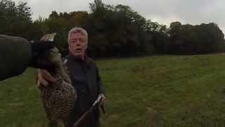 chasse faisan perdrix aux setters anglais