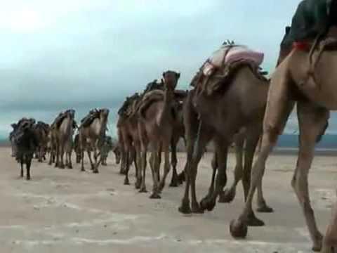 Скачать песню вот идет караван по зыбучим пескам ремикс