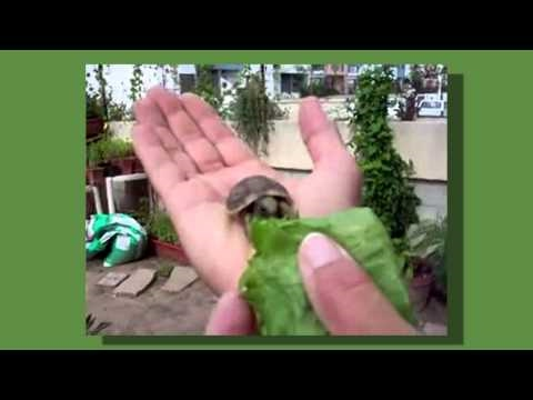 Thumb Tiny Turtle EXPLODES (but in a cute way)