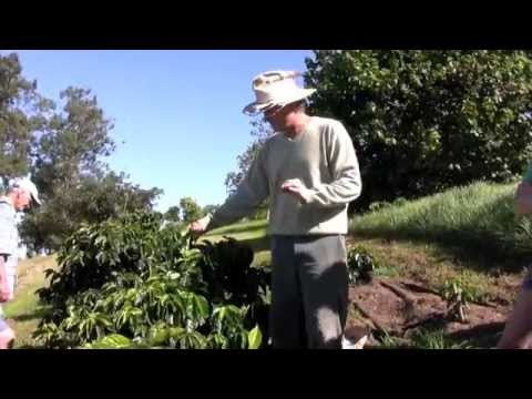 Hawaiian Organic Farm Tour in Maui