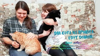 Из приюта сразу два кота поехали в новый дом Счастливое усыновление Кима и Рыжика animals shelter