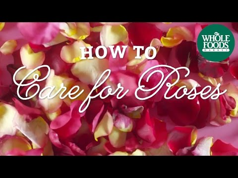 How To Care For Roses   Valentine's Day Technique   Whole Foods Market