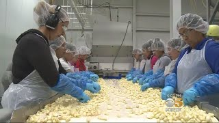 Gilroy Garlic Company Makes Amends After Critical Documentary With Wage Increases