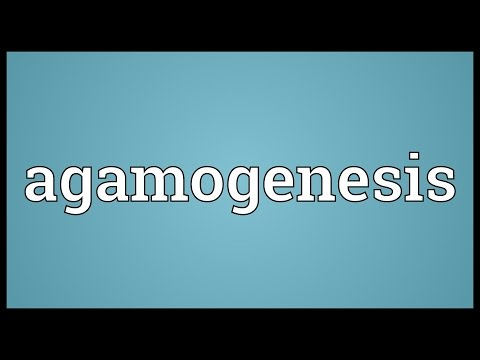 Header of agamogenesis