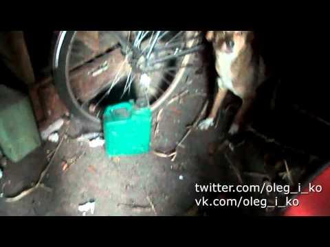 Животные в Никишино 22. Собаки которые вместе без хозяев живут в гараже