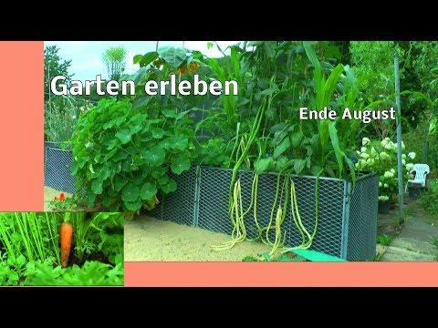 Garten erleben mit Detlef. Inspirationen für Mensch und Tier ende August