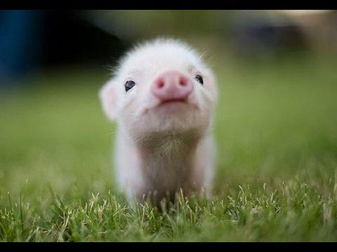 Top 10 Cutest Baby Animals