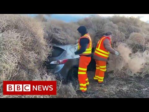 Tumbleweed traps cars on Washington State road - BBC News