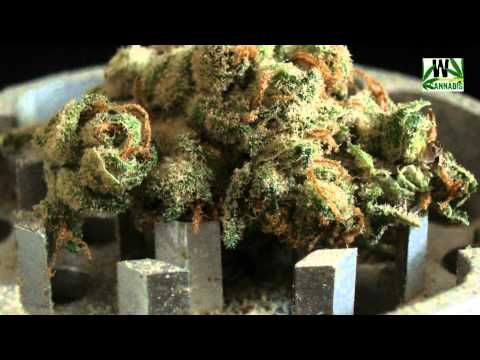 Some of the World`s finest Cannabis strains RELOADED