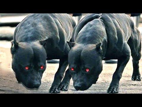 Beslenmesi Yasaklanmış 10 Köpek Irkı