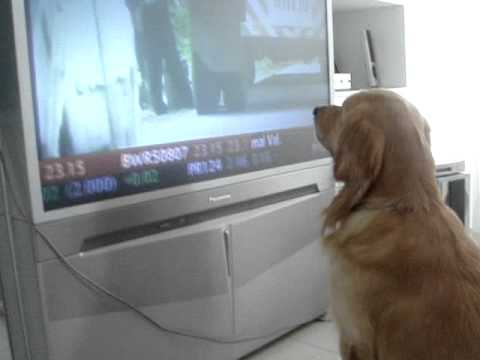 ดูทีวี