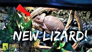 A New Lizard | Newest UPDATE on the Antiverse