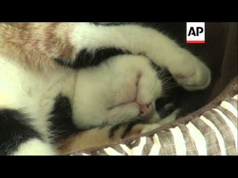 Inspired by similar businesses in Asia, the first permanent cat cafe in the US just opened in Oaklan