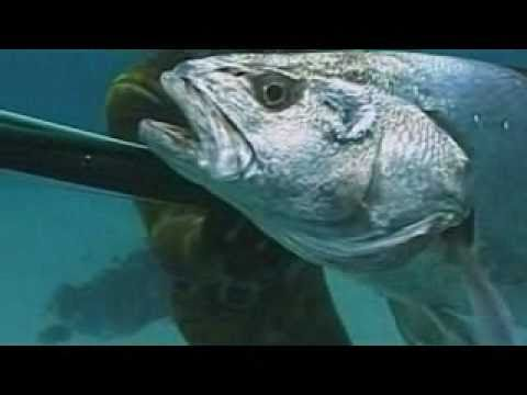 Spearfishing | Catching Big Fish Spear Fishing Snorkeling