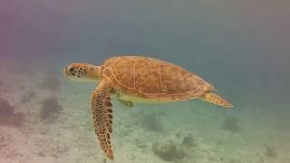 Bonaire Underwater 2018 - Created by Google Photos