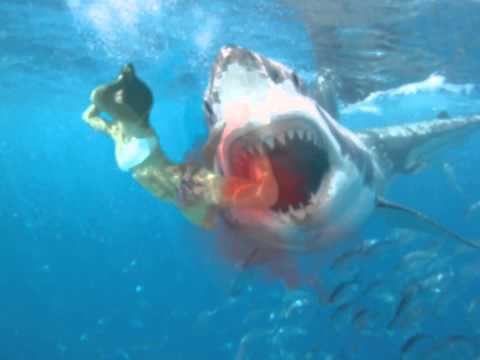 Shark Attack on Woman 2013