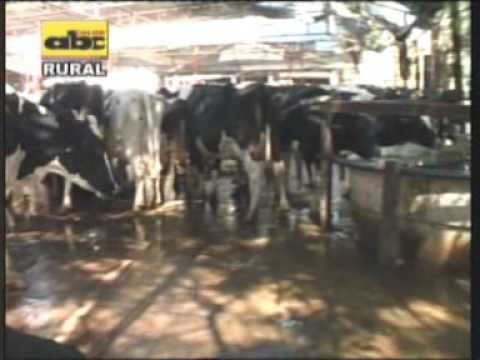 Estrés calórico en vacas lecheras