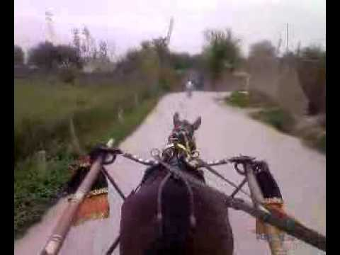 Tanga transport through Swabi Pakistan