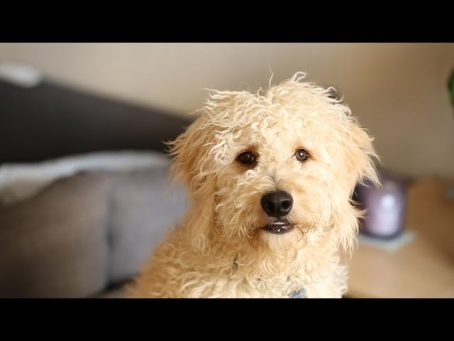 Watch as this puppy tests the new Furbo dog camera
