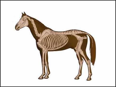 Osteología de un equino... con Dheikson Bergmann!!!