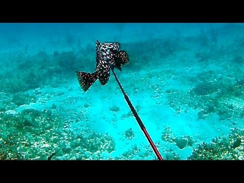 Bahamas Spearfishing 2012 - Part 2 - Narrated by Ted's HoldOver