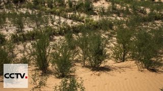Northern Senegal defends against desertification with trees