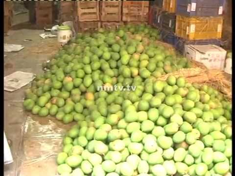 Mango prices fall down due to European ban
