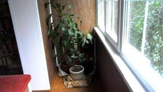 Максимус окна - отделка объединенного балкона.