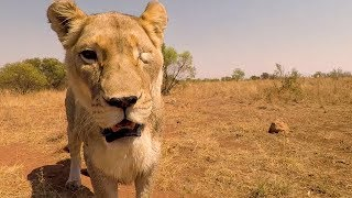 Feed, Clean, Repeat! | The Lion Whisperer