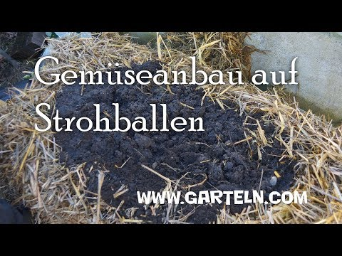 Gemüseanbau auf Strohballen - Moderner Bauerngarten