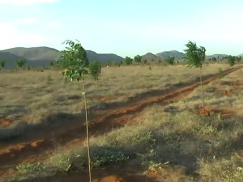 Primeira floresta plantada no sertão com novo método de irrigação.