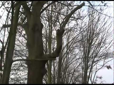 Baumschnitt - Äste Richtig Schneiden Ohne Huthaken