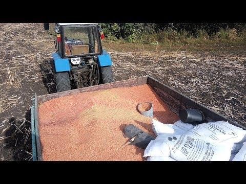 Посев пшеницы 2017  после убранного подсолнуха. Сорт Журавка  #СельхозТехника ТВ