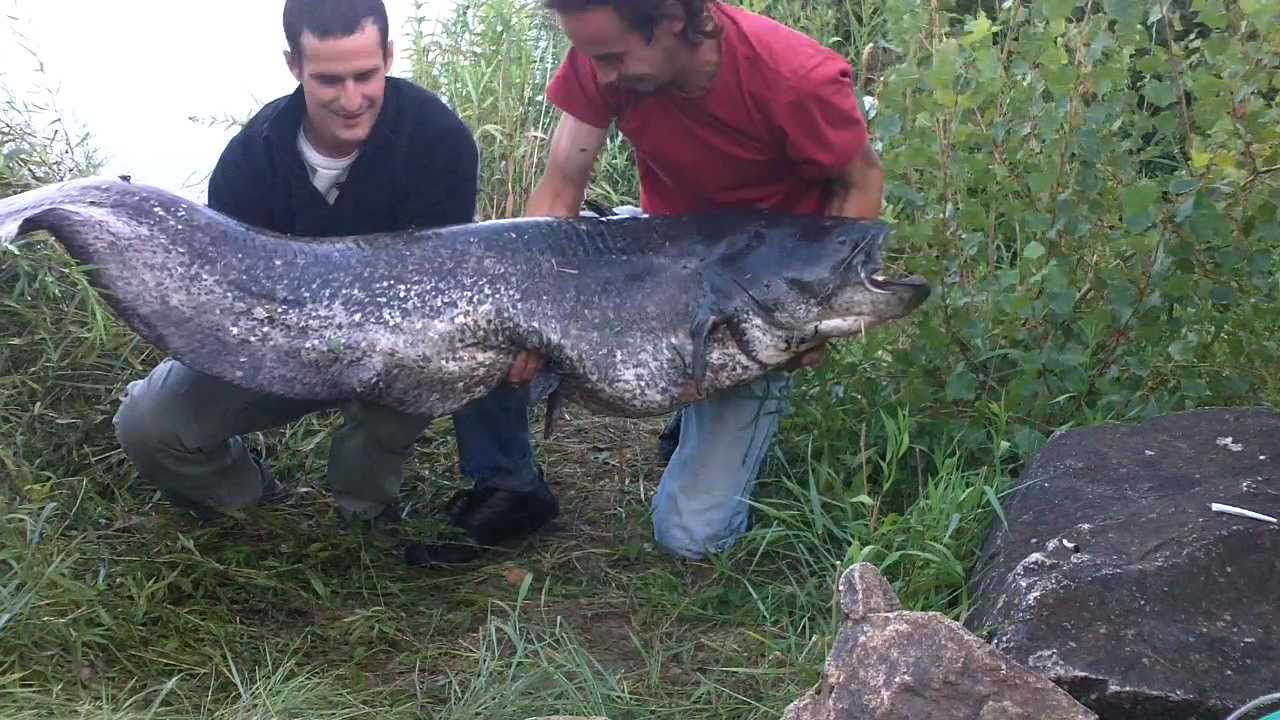 La pêche russe safari le pacha