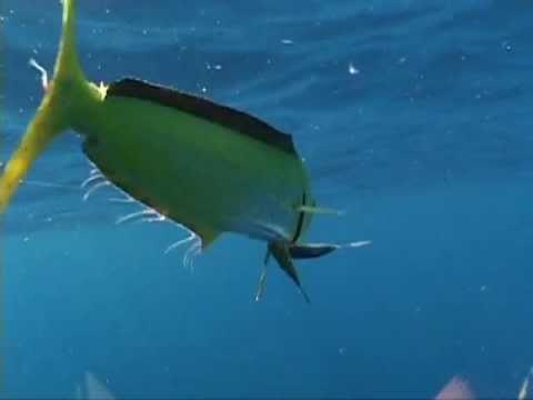 North carolina fishing report fishing world for Deep sea fishing outer banks nc