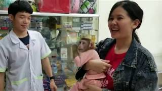 Monkey Baby Nui | Parents took Nui to vaccinate at the veterinary hospital