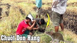 Trúng Hang Cống Nhum Bắt Chuột Miền Tây Cười Bể Bụng /catch the mouse/NGÃ NĂM TV