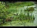 Экстримальная рыбалка на щуку  в болоте.