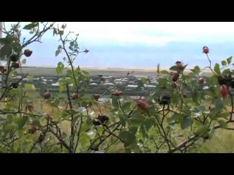 Зарисовка 5. Сардарапат, Армавир, Октемберян ,Армения Music Videos