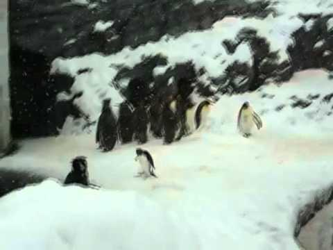 Hardcore Penguin 2 video