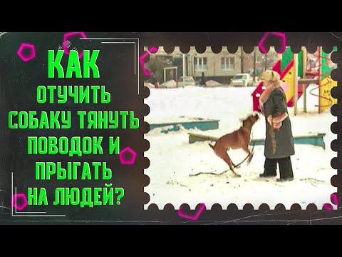 Как отучить собаку тянуть поводок и прыгать на людей(один из способов)