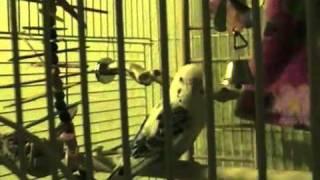 Watch Judybats Daylight video
