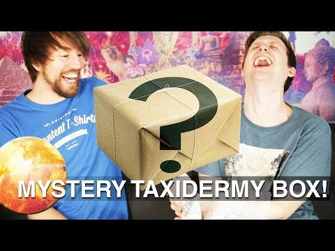 MYSTERY TAXIDERMY BOX!