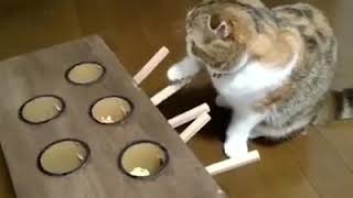 Cats funny game see this video please subscribe my channel under my new videos automatic in your mob