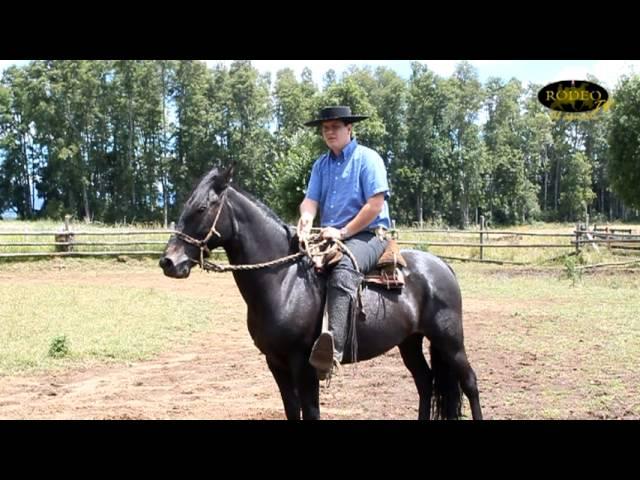 RodeoTV Al Aguaite - Cómo enseñar a su caballo a retroceder