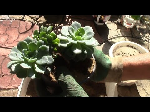 Прямой эфир! Любители растений, приглашаю!